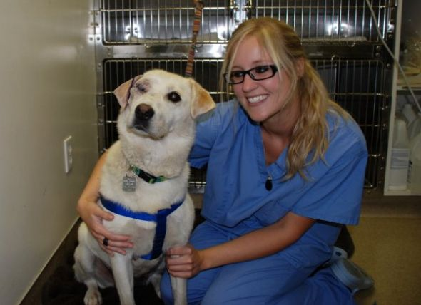 Veterinarian technician Megan Fontaine with Faith, a Labrador retriever whose eye was surgically removed last week. The bill for surgery and other treatment exceeds $1,000.
