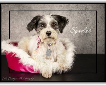 Dogs and Puppies Adoption and Non-Profit Rescue Group from